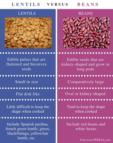 Difference-Between-Lentils-and-Beans-Comparison-Summary-min