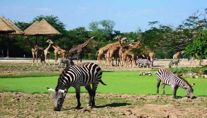 Zoological-garden-of-the-University-of-Ibadan-